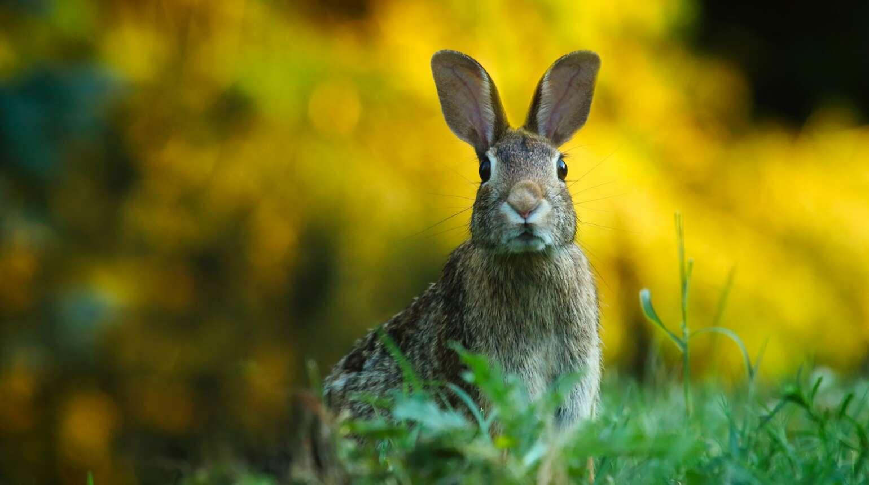 Praktyczne porady pomocne na różne zwierzęce problemy