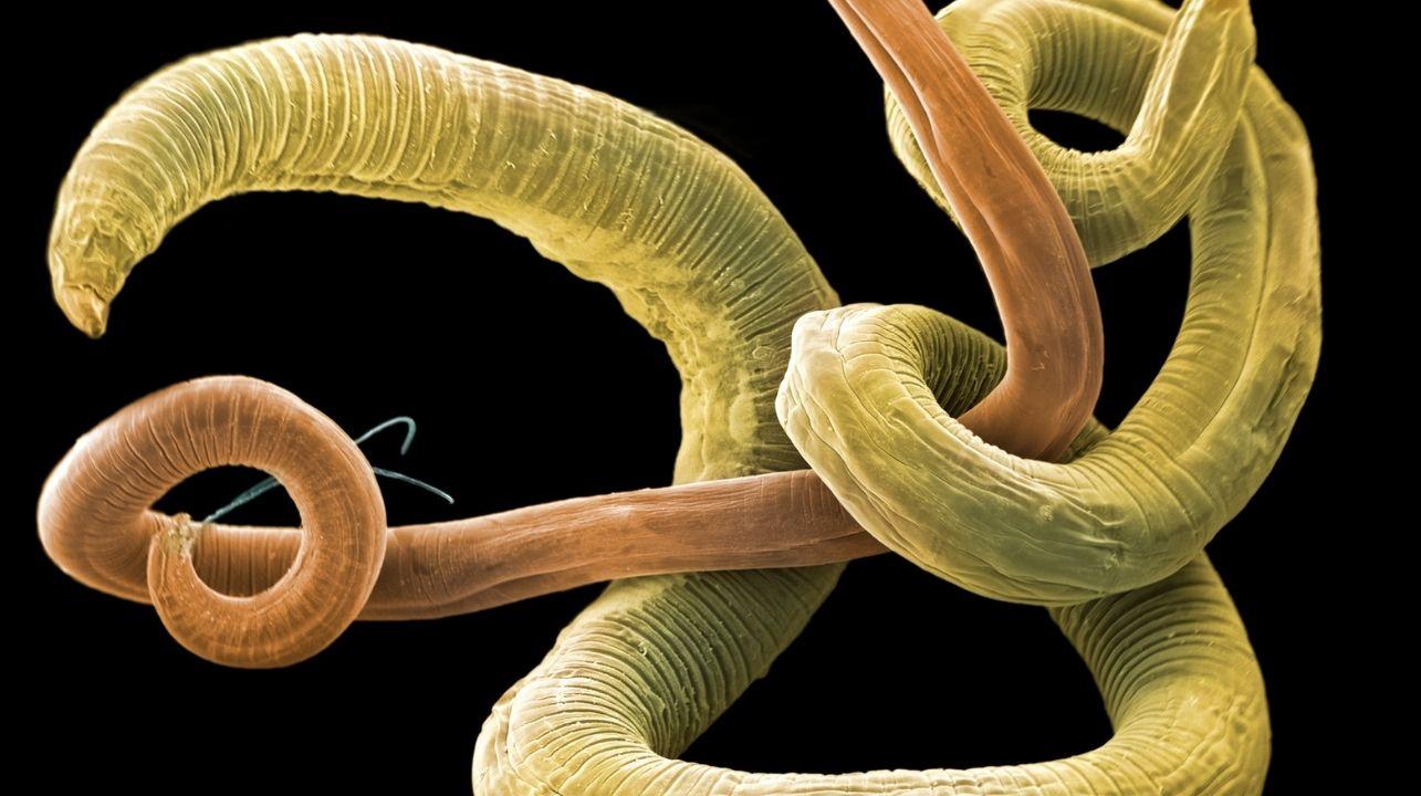 Kocia glista – profilaktyka oraz sposoby zwalczania